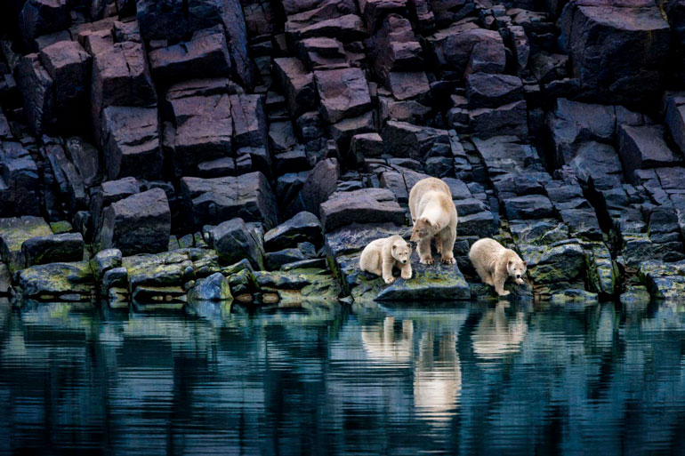 Nature Photographer Paul Nicklen to Open NYC Gallery on ...