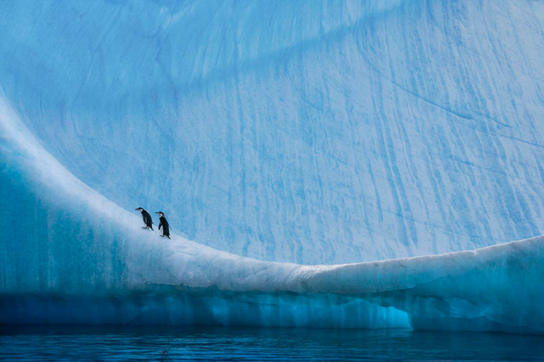 Nature Photographer Paul Nicklen To Open Nyc Gallery On